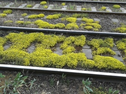 Schriftzeichen in der Sprache der Blumen