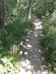 Müll im Wald beim Schloß Neugebaude